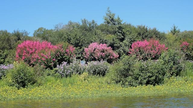 (40) Promenade fleurie du Lac de Mimizan-Aureilhan Cata_l15
