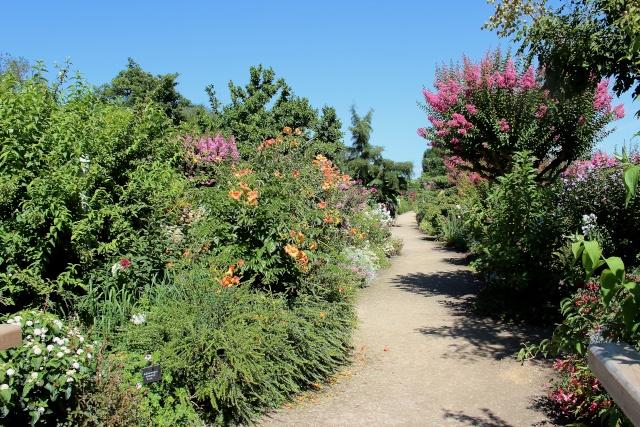 (40) Promenade fleurie du Lac de Mimizan-Aureilhan Dabut_10