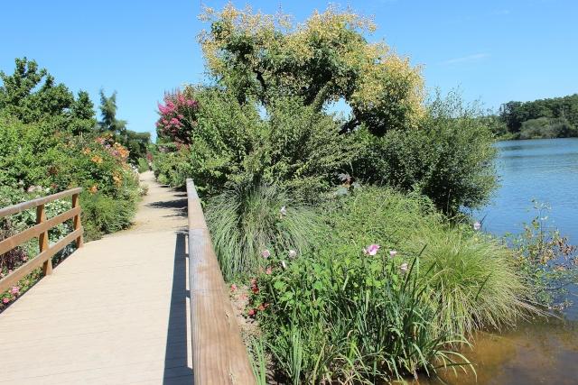 (40) Promenade fleurie du Lac de Mimizan-Aureilhan Entrae14