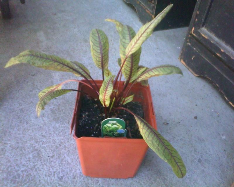 plante malade!!!!! 08221211