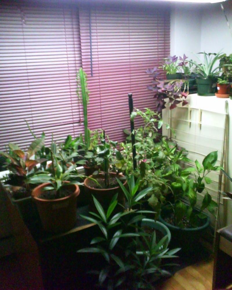 nouvelle mise à jour de mes plantes 09251210