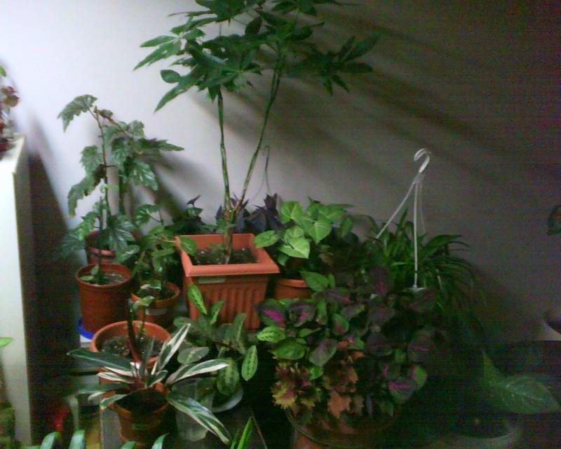 nouvelle mise à jour de mes plantes 10011210