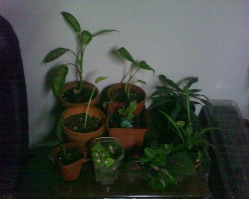 nouvelle mise à jour de mes plantes 10011211