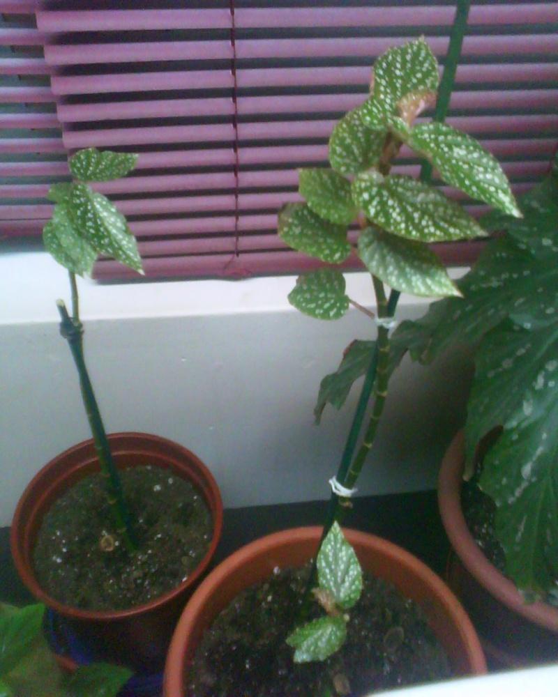 La famille vient de s'agrandir :-) Bambus10