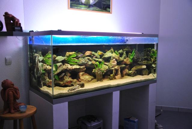 540 Litres Cichlidés du Malawi/M'bunas Aqua_512