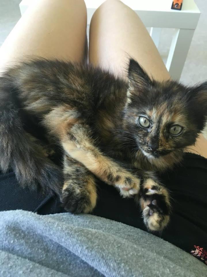 nouvelles du chat  MARLEY 13578410