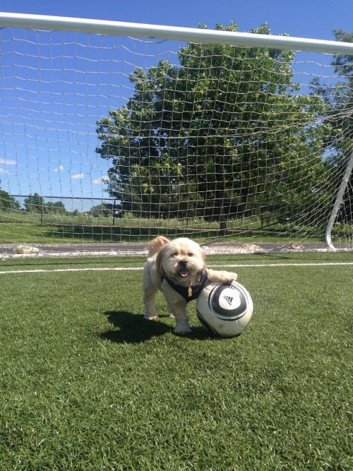 La testa nel pallone - Pagina 5 Soccer10