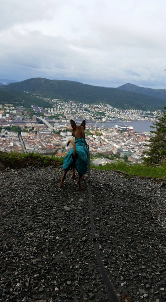 Nos 10 jours de vacances en Norvège 13876410