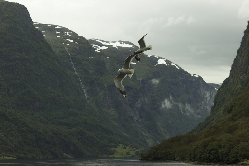 Nos 10 jours de vacances en Norvège Img_3011