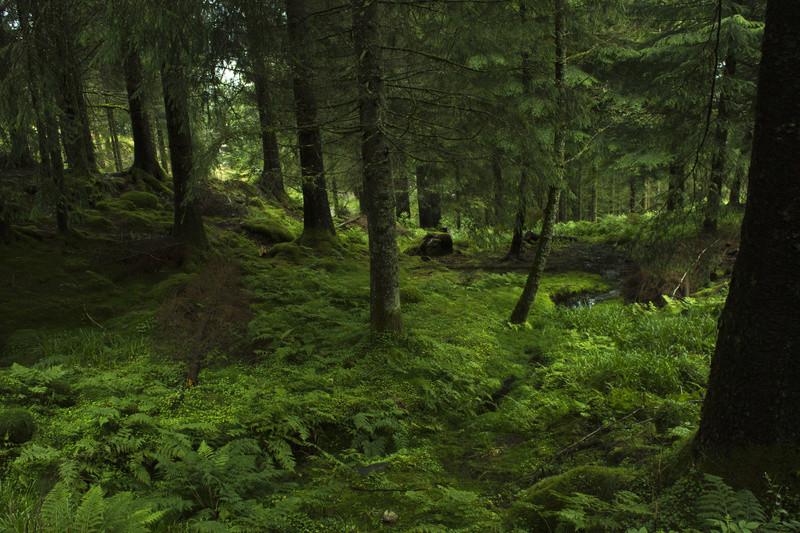 Nos 10 jours de vacances en Norvège Img_3113