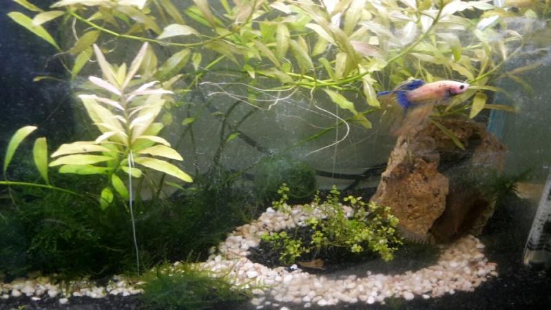 L'aquarium d'Avril 3288fa10