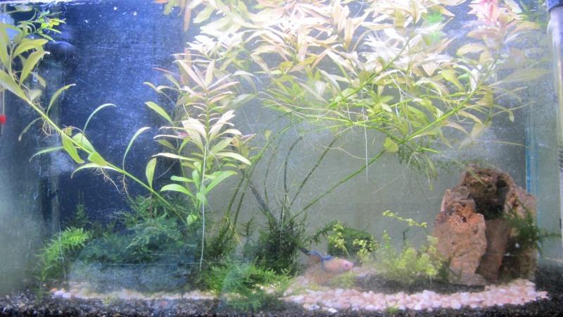 L'aquarium d'Avril Ert10