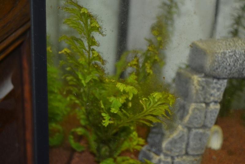 Plantes Dsc_0010