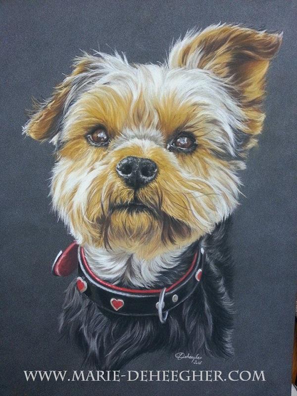 Marie Deheegher - Artiste Animalier - Page 2 Milo-y10