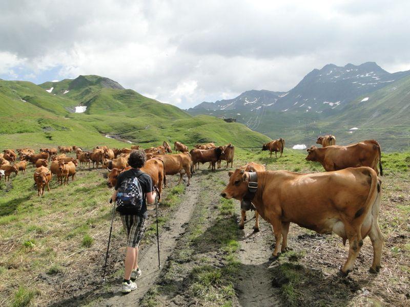 Col de la Traversette par vallons du Reclus et des Moulins Dsc02353