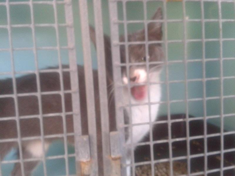 EXTRÊME URGENCE fourrière le 19 août pour 5 chats B11