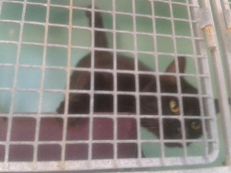 EXTRÊME URGENCE fourrière le 19 août pour 5 chats F11