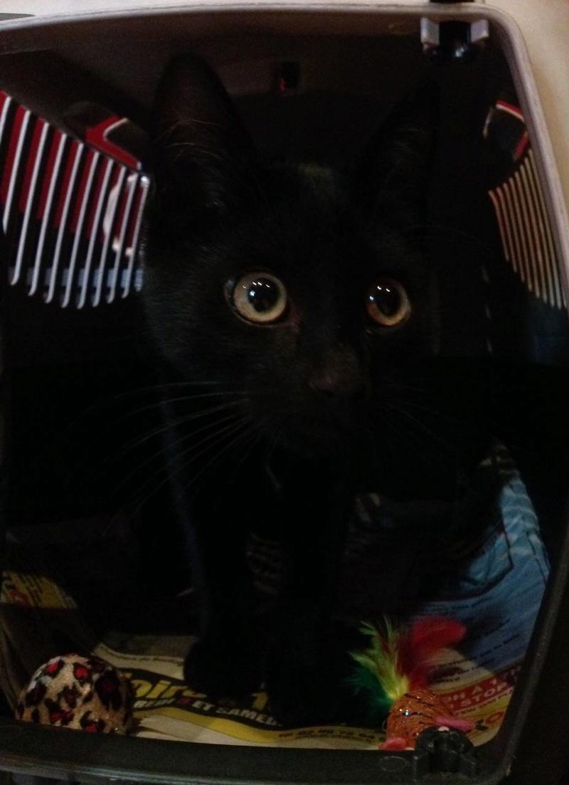 [CLOS] EXTRÊME URGENCE fourrière le 22 juillet pour un chaton Fullsi14