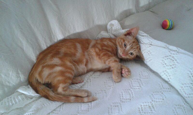 EXTRÊME URGENCE fourrière le 2 septembre pour un chaton Img_6910