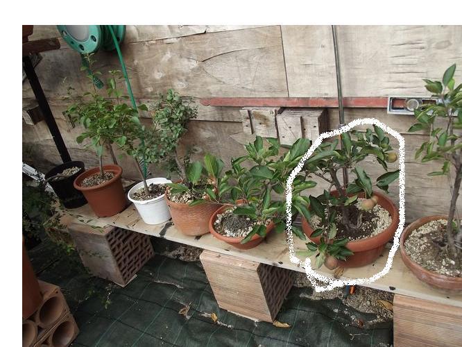 le mie piante (quasi) a posto! Dscf7010