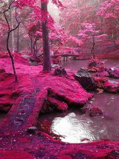 Following the stream (Ada/Tam) Sakura10