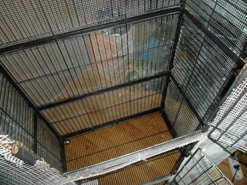 A VENDRE : Cage perfect (furets et chinchillas) regrillagée Dsc06513