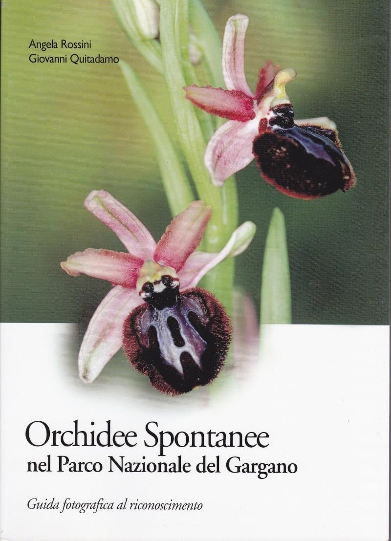 Orchidee spontanee nel parco nazionale del Gargano Gargan11