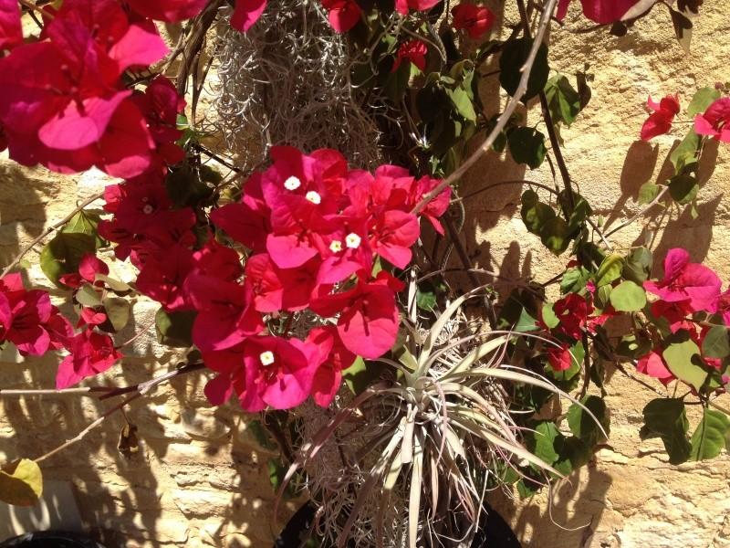 petits bouquets de juillet Bougai10
