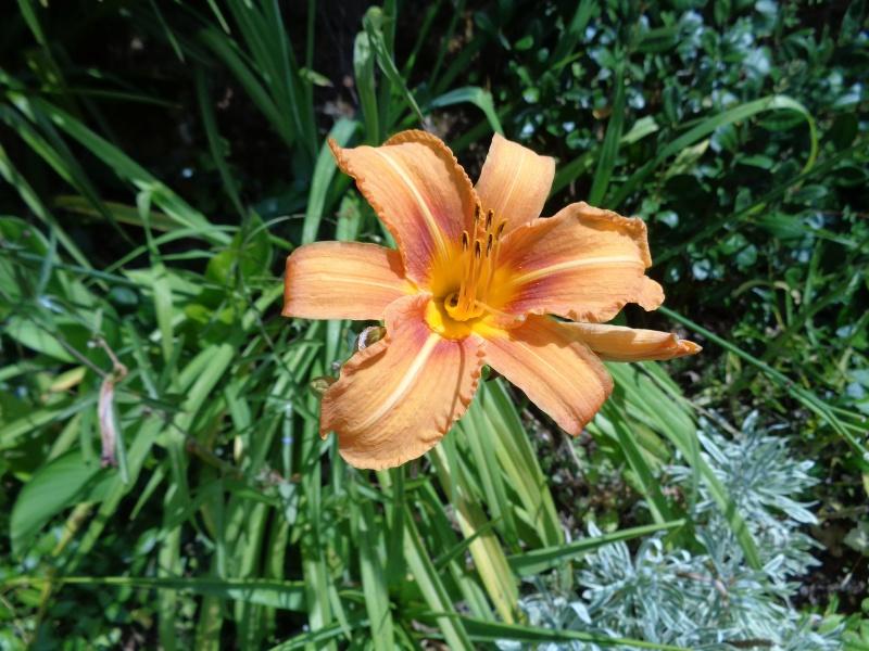 cadeaux du jardin, juin juin - Page 6 Dsc01112