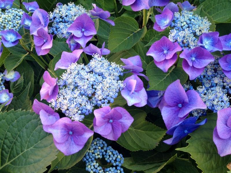 petits bouquets de juillet Img_2712