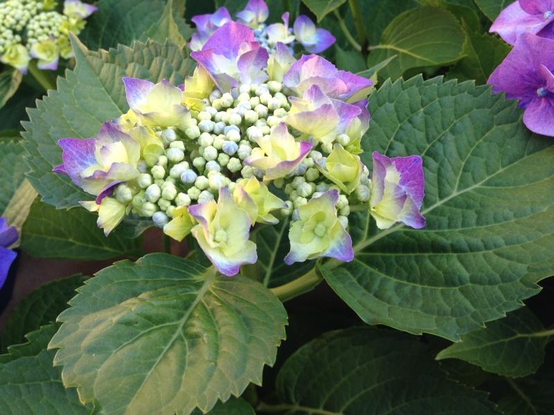 petits bouquets de juillet Img_2713