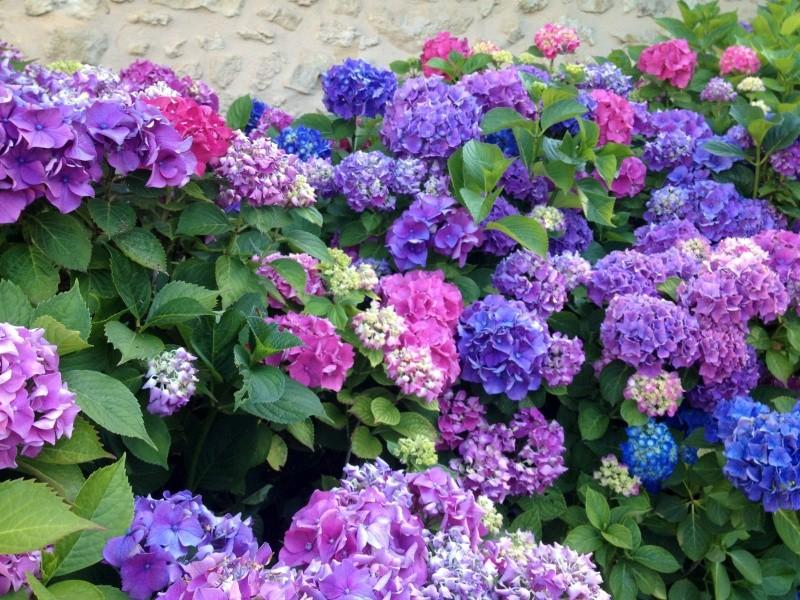 petits bouquets de juillet Img_2714