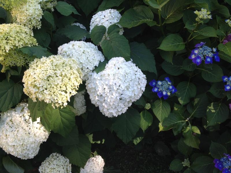 petits bouquets de juillet Img_2715