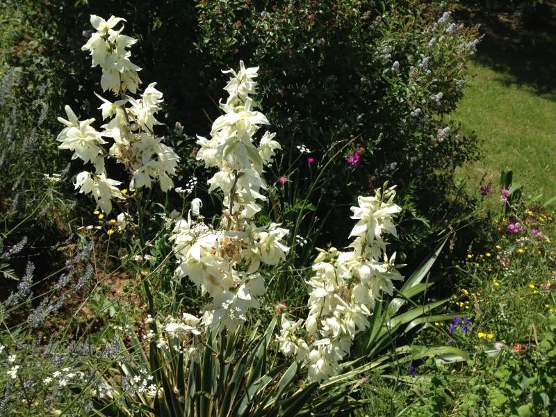 petits bouquets de juillet Img_2716