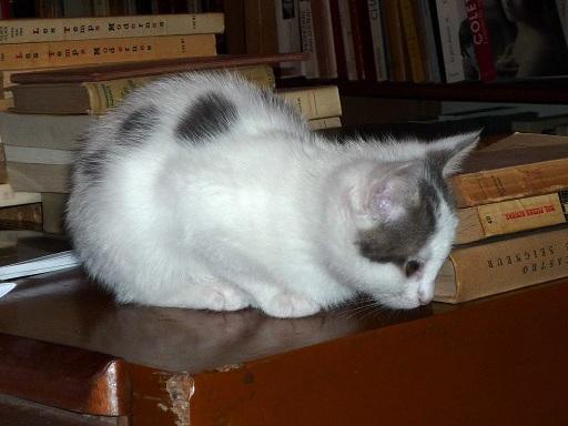 Louis Wain...et ses célèbres chats ! 14032911