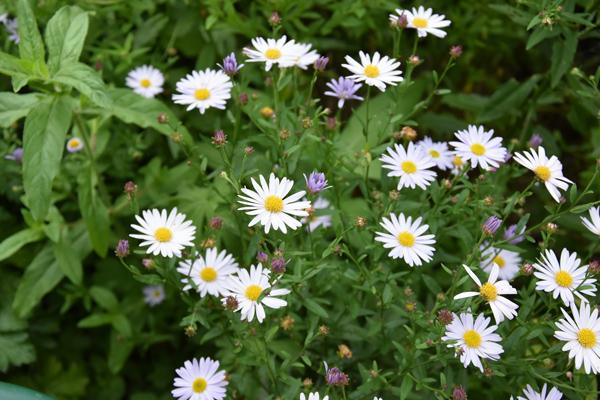petits bouquets de juillet - Page 2 Kalime10