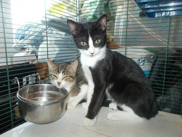 Quoi faire pour cette chatte  et ses chatons ? - Page 4 00611