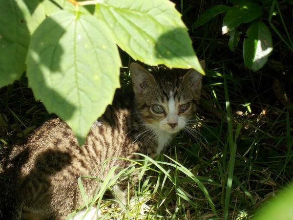 Quoi faire pour cette chatte  et ses chatons ? - Page 2 Chaton10
