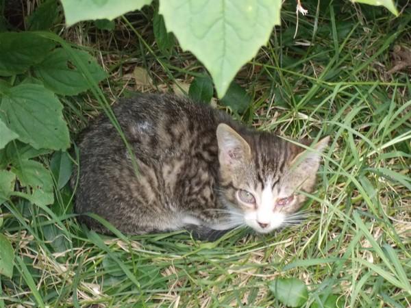 Quoi faire pour cette chatte  et ses chatons ? - Page 2 Chaton12