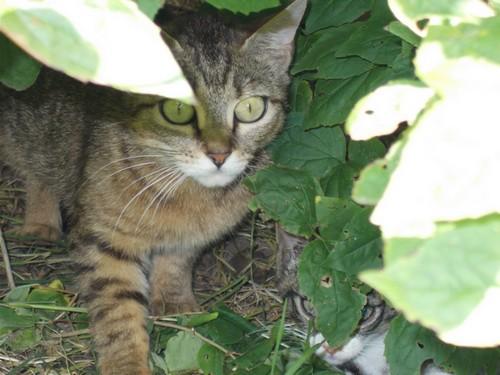 Quoi faire pour cette chatte  et ses chatons ? - Page 2 Chatte10