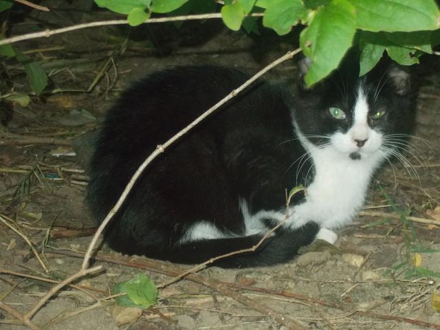 Quoi faire pour cette chatte  et ses chatons ? - Page 3 Dscn2715