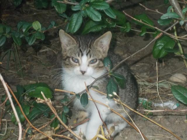 Quoi faire pour cette chatte  et ses chatons ? - Page 3 Dscn2716