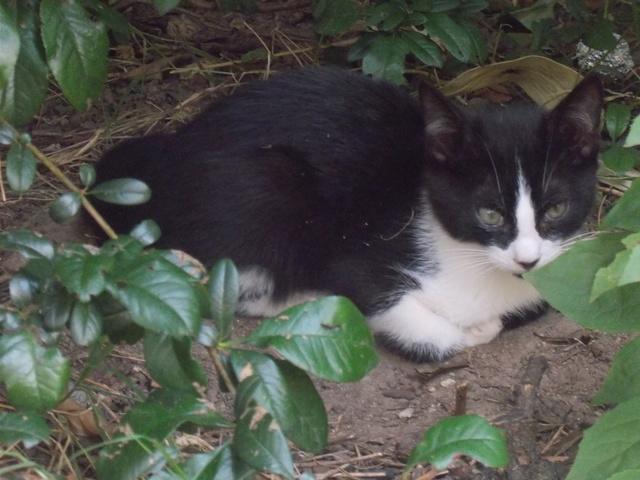 recherche famille d'accueil pour une chatte et ses chatons dans le 69 (Rhône) Dscn2810