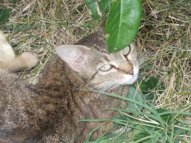 recherche famille d'accueil pour une chatte et ses chatons dans le 69 (Rhône) Dscn2811