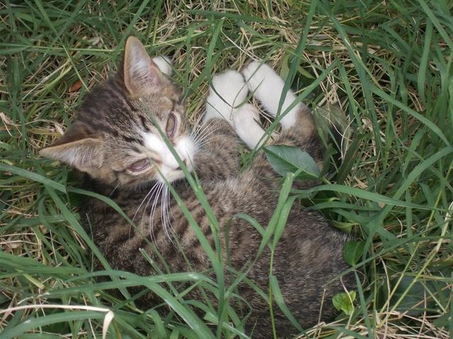 recherche famille d'accueil pour une chatte et ses chatons dans le 69 (Rhône) Dscn2812