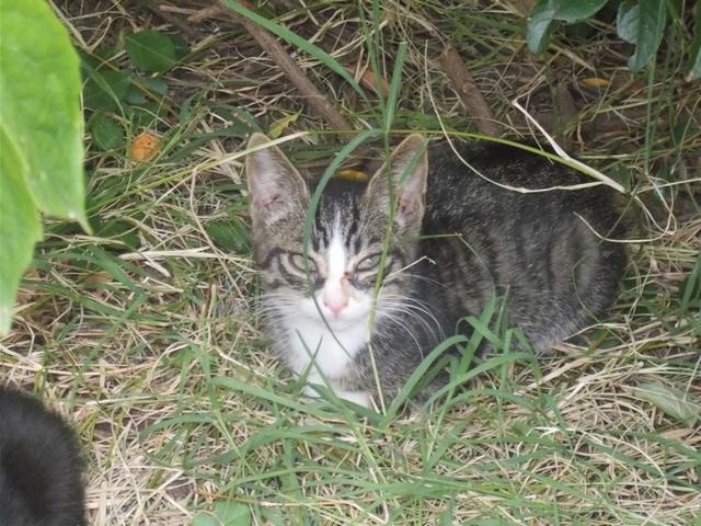 recherche famille d'accueil pour une chatte et ses chatons dans le 69 (Rhône) Dscn2814