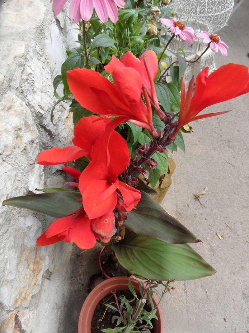 Floraisons du mois de juillet - Page 13 00312