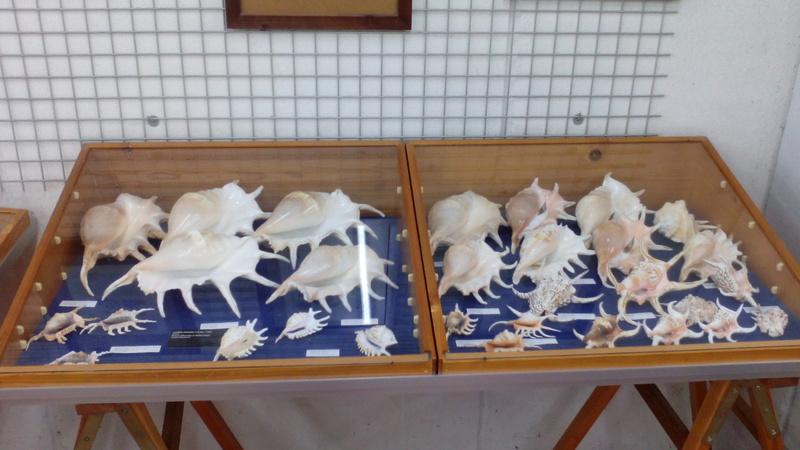 Museo Malacologico Cupra Marittima Img_2013