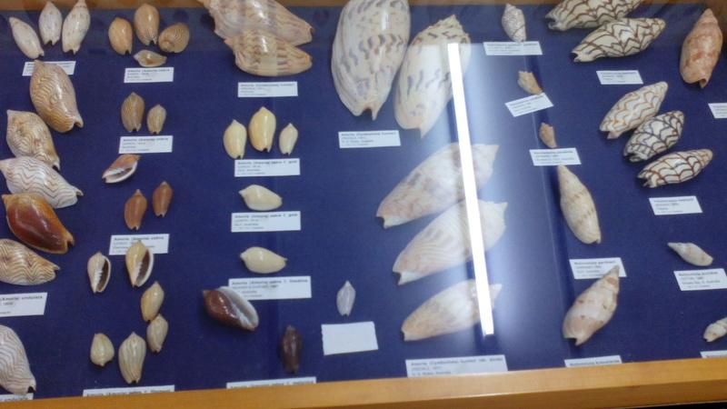 Museo Malacologico Cupra Marittima Img_2018