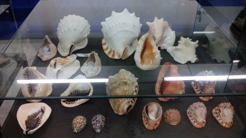 Museo Malacologico Cupra Marittima Img_2026